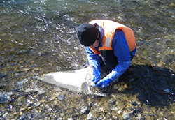 河川 水辺 の 国勢 調査 マニュアル