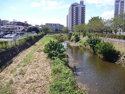 「空堀川」の画像検索結果